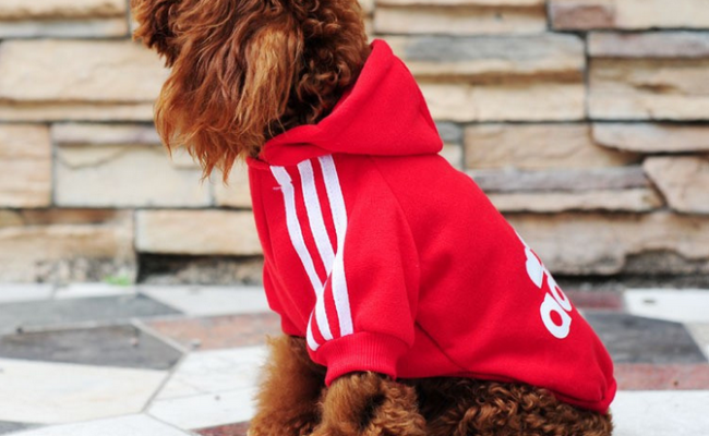 Спортивный костюм для собак.